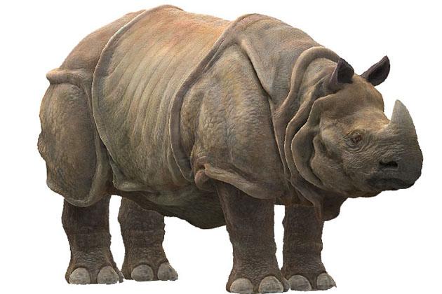 rinocerontejava